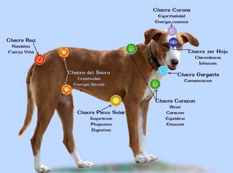 Chakras, rueda…cuerpo y conciencia   Alma animal: cuidados ...